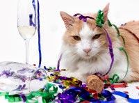 Photo of Now You Can Buy 'Wine Exclusively For Cats'