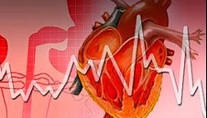 Photo of 8 Interesting facts about your heart