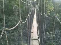 Photo of Holiday Revelers Fall off Canopy Walkway