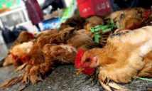 Photo of Bird flu outbreak could worsen – Agric Ministry warns