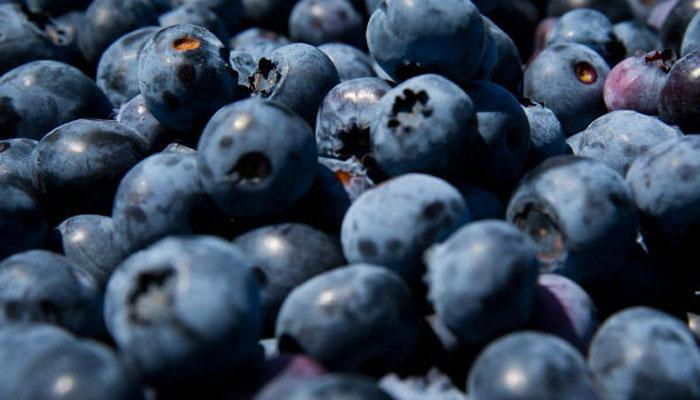 Photo of Want to improve your brain function? Start drinking blueberry juice